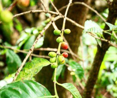 kawa na świecie 18
