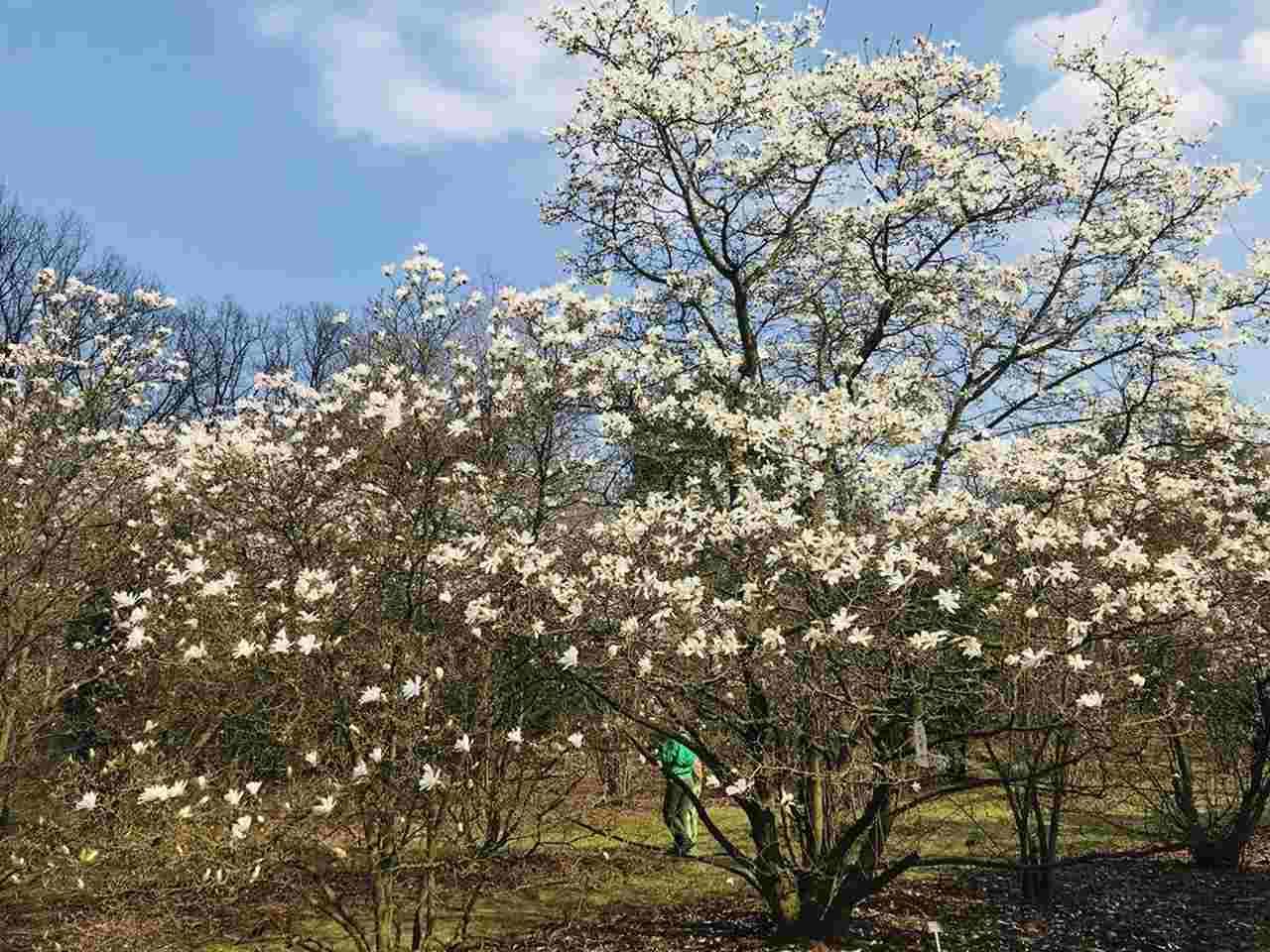 Powsin Ogród Botaniczny