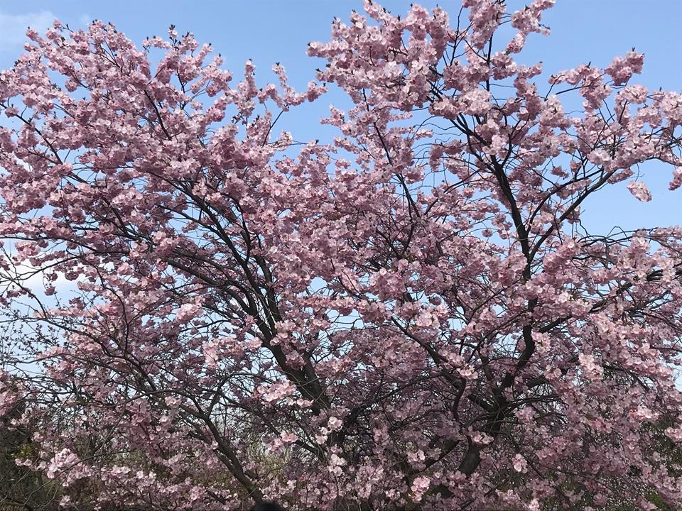 Powsin Ogród Botaniczny 19