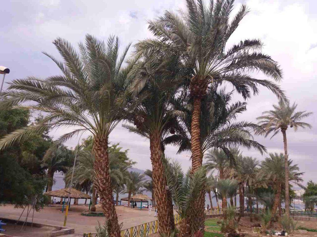 Akaba w Jordanii