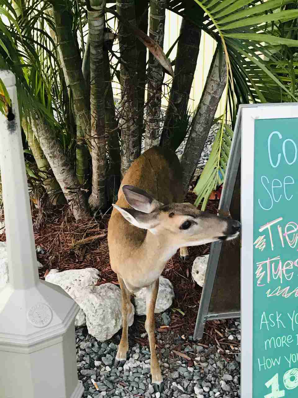 Key West Floryda 5