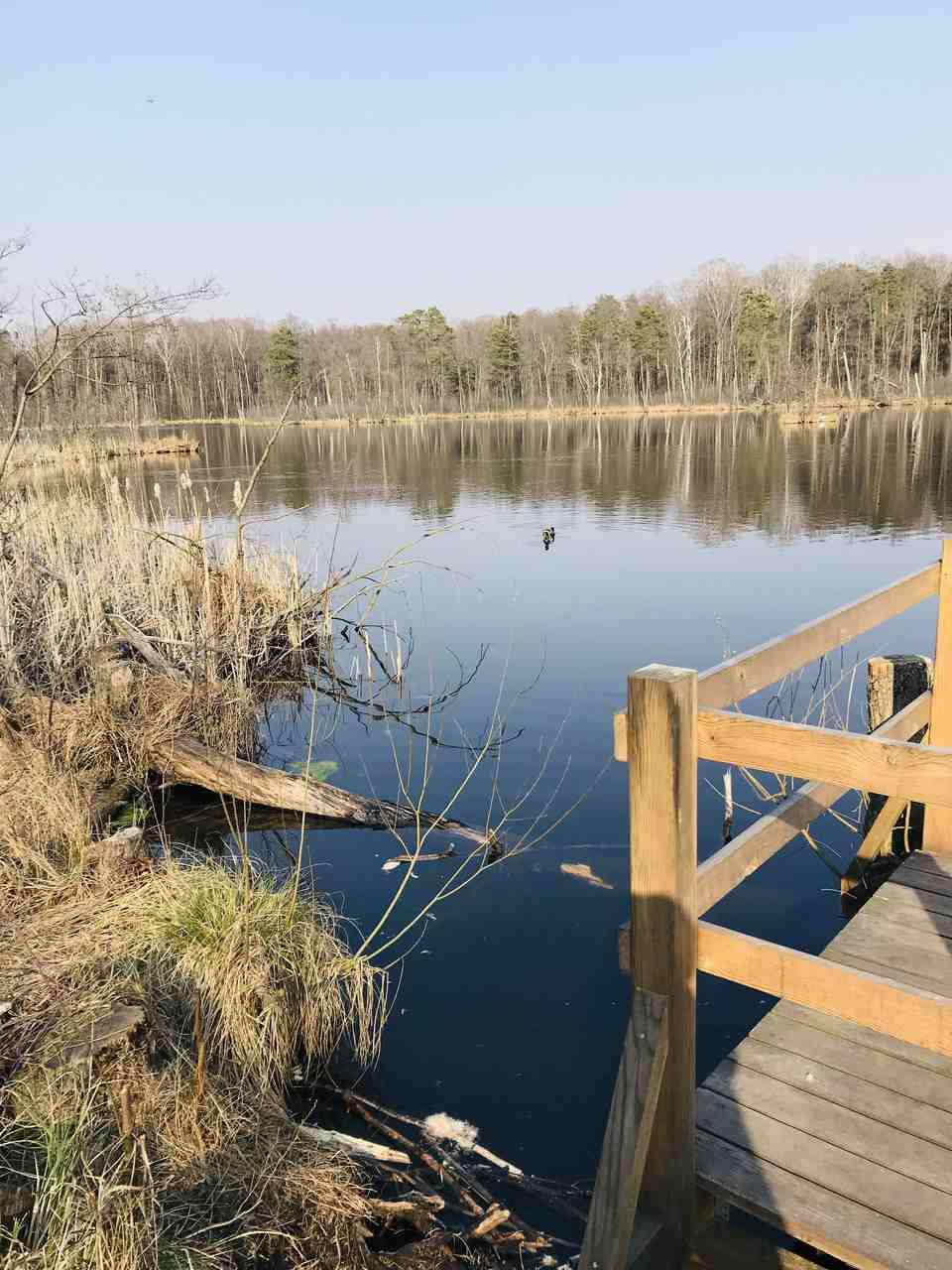 rezerwat przyrody pod Warszawą 9