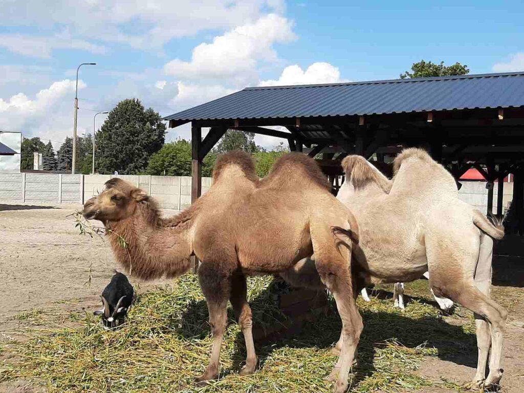 muzeum lniarstwa Żyrardów
